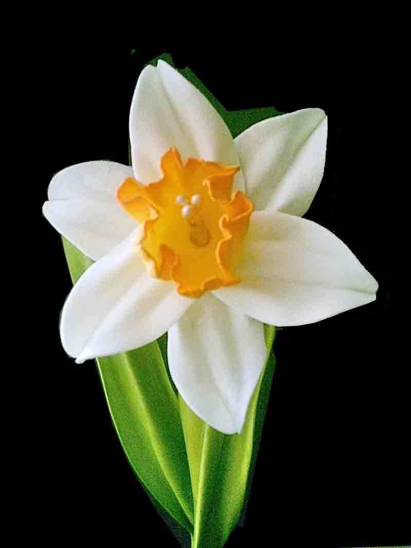 Flower Narges